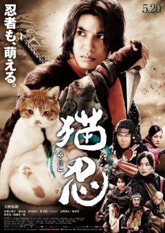 Ниндзя и кот